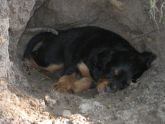 puppy-in-a-hole-july-241